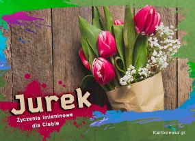 Tulipany dla Jurka