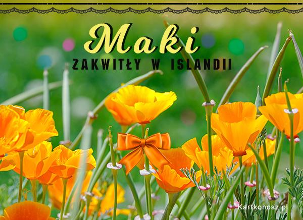 Islandzkie maki
