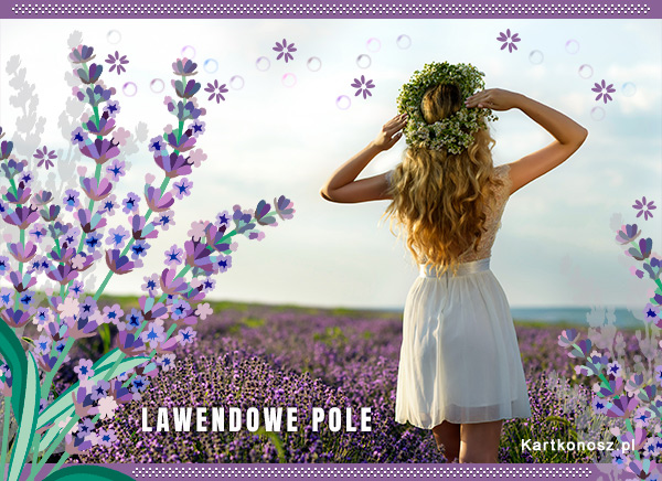 Lawendowe pole