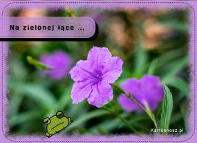 eKartki Kwiaty Na zielonej łące ...,