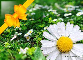 e Kartki Kwiaty Wiosenny prezent,