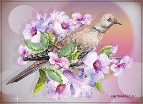 eKartki Kwiaty Życzę miłego dnia!,