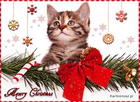 Świąteczne pozdrowienia