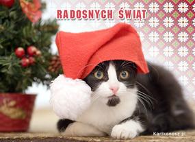 eKartki Boże Narodzenie Kotek - Mikołaj,